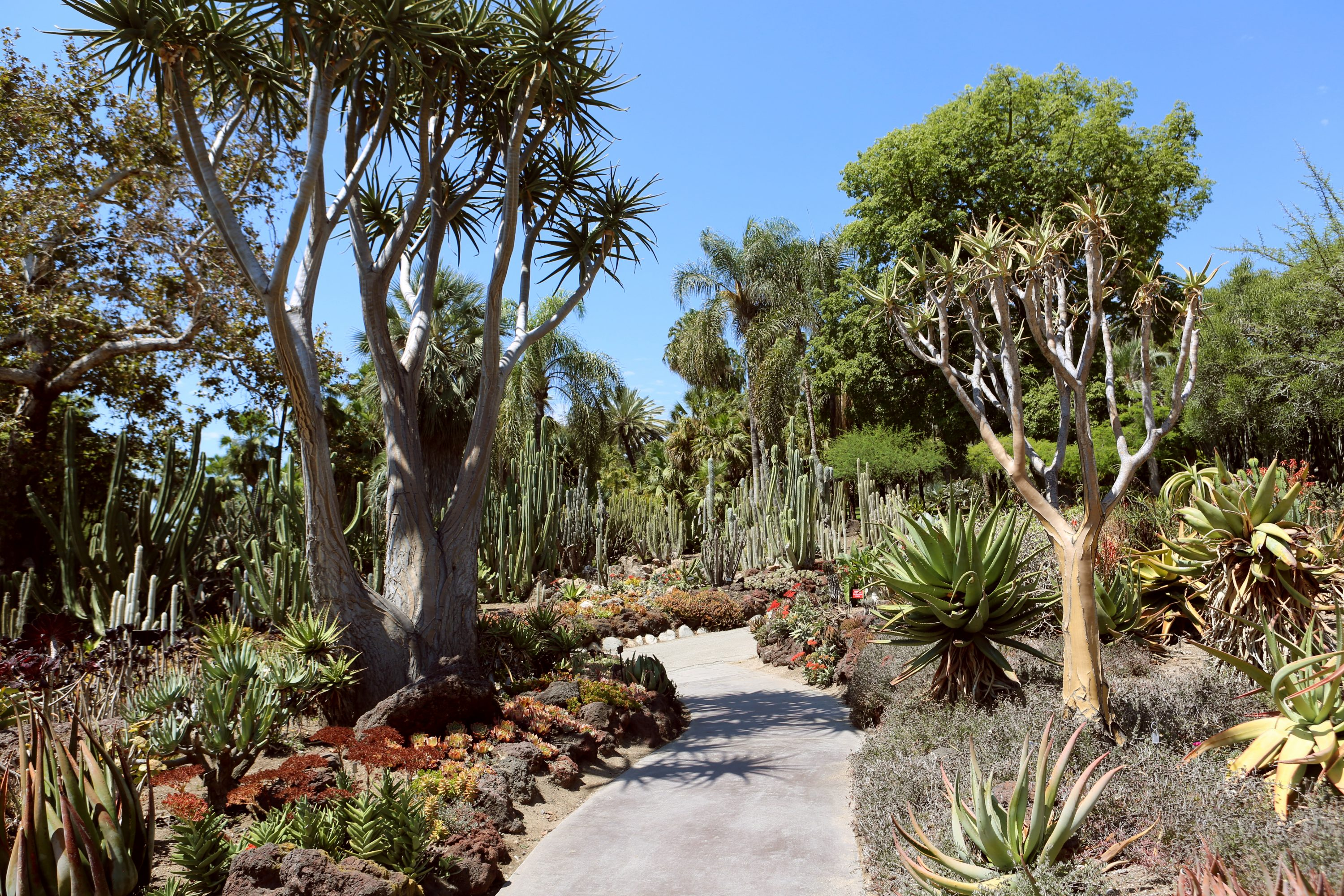 botanical gardens research paper on california University of california botanical gardens at berkeley  it's a hotspot of research  on plant ecological genetics, but is also open to the public year-round.